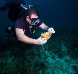 Любоваться разноцветьем подводного мира Кубы лучше всего зимой и в начале весны