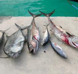 Даже в самом райском уголке мира расслабленный отдых может наскучить, в этот момент на помощь придёт рыбалка!