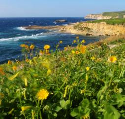 Уже в первый весенний месяц можно полностью насладиться великолепием этого цветущего архипелага