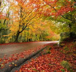 В середине октября погода начинает портиться - температура воздуха понижается, и дожди льют всё чаще