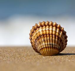Бархатный сезон на Азовском море - скорее удача, чем закономерность