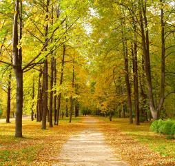 Настоящая осень во многие города России приходит уже с первых чисел сентября