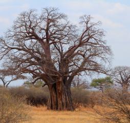 До середины осени в Танзании царит сухая комфортная погода