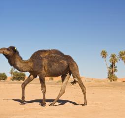 Зимой в Тунисе умеренно тепло, но не исключены и кратковременные похолодания